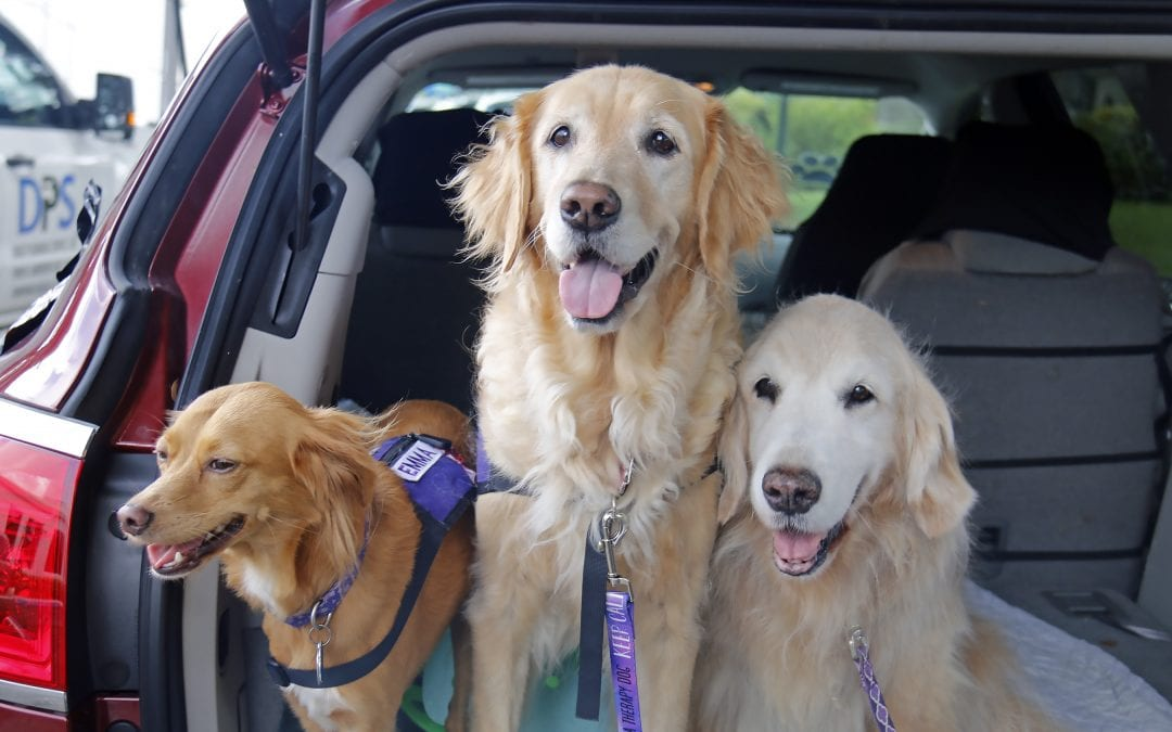 Canine Assisted Therapy Brings A Parade Of Happy Pets To JKV
